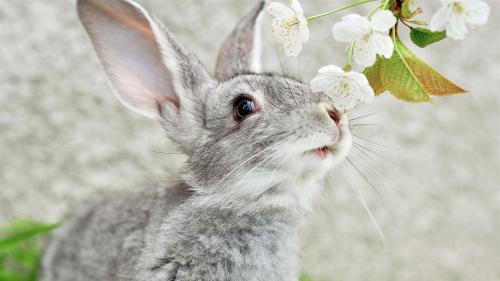 13 important facts about rabbits