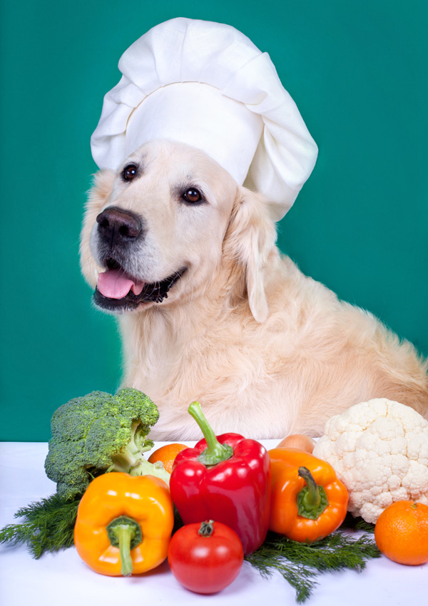 Give vegetables to dogs