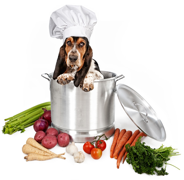 What vegetables can be given to dogs