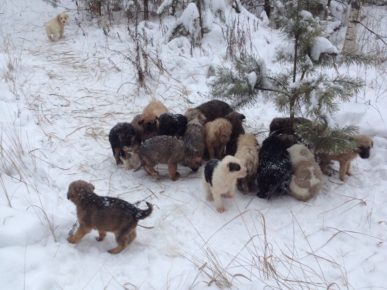 A resident of the Ryazan region found 20 puppies in the forest