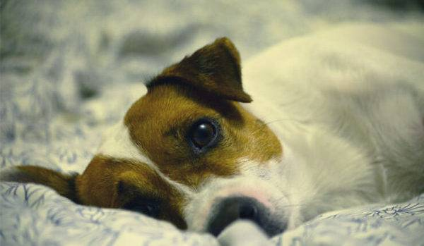Symptoms of ascites in dogs