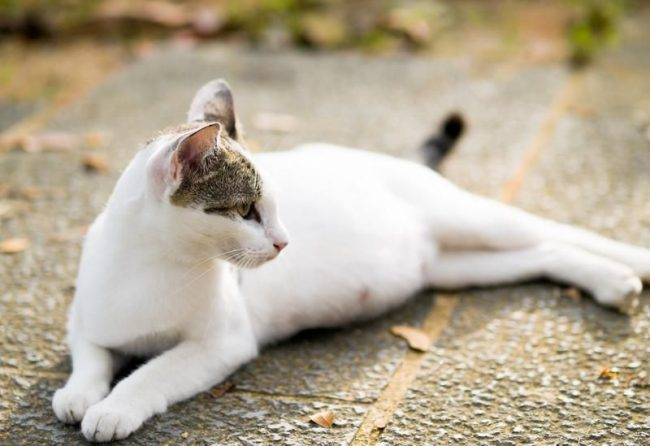Pregnancy in a cat in most cases proceeds without complications