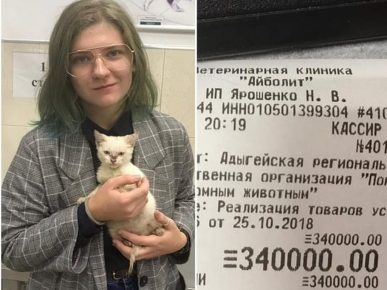 In Maykop, a student paid the debts of volunteers to save a kitten