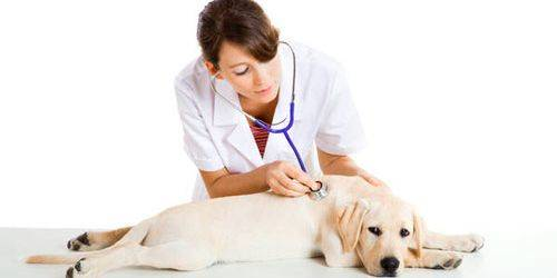 Diagnosis of fungus in dogs