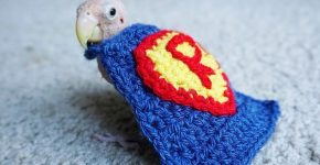 Rhea in a superman costume
