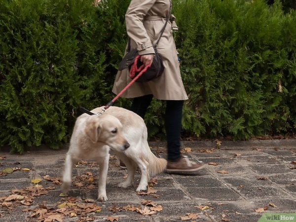 How to wean a dog pull on a leash