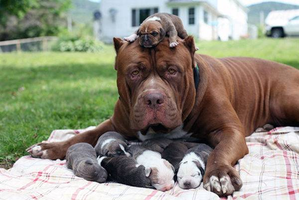 puppies and their mother are resting