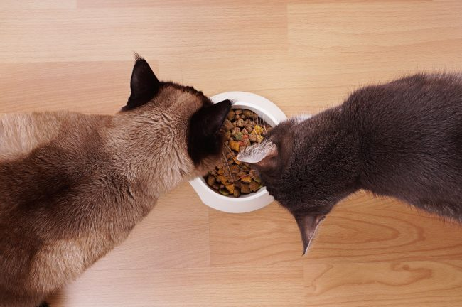 Owners are afraid to give dry food to their pets through the risk of stones in the urinary tract. But in vain. The producers managed to create a dry food formula that came close to the cat's ideal diet.