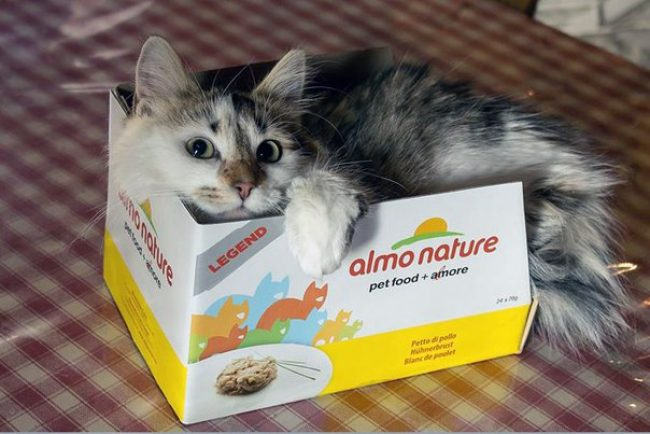 Almo Nature for cats