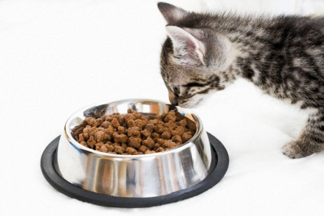 feed hills for cats reviews