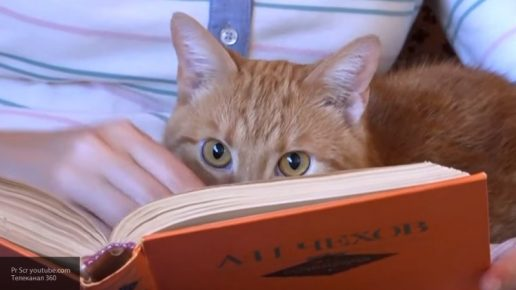 The cat is reading a book