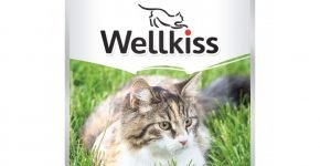 Canned Wellkiss for adult cats