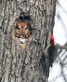 owl and woodpecker