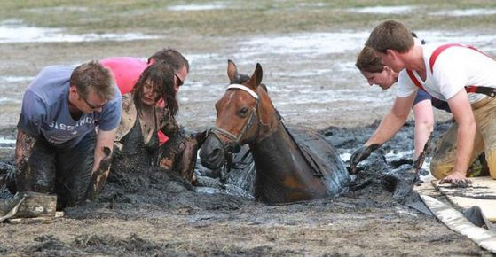 Rescuers pull a horse out of a quagmire