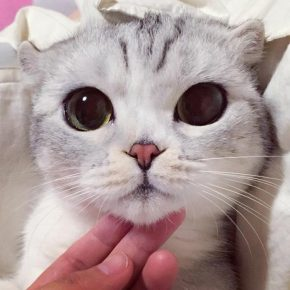 Cat with big eyes